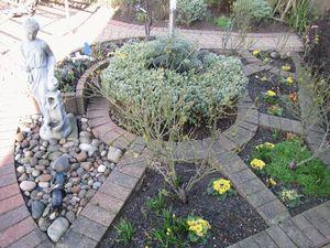 Angelica Court Walnut Tree