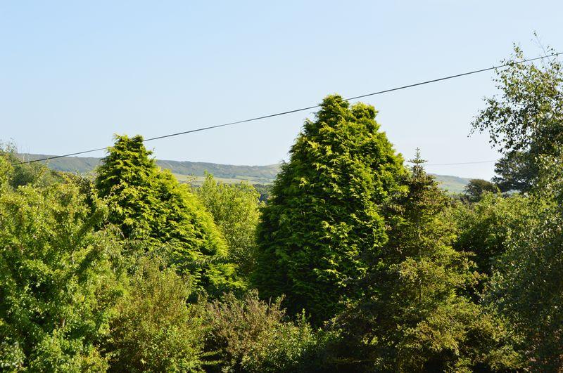 Town Lane Chale Green