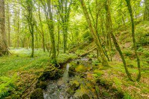 Great Tree Park