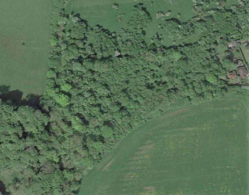 Trees Road