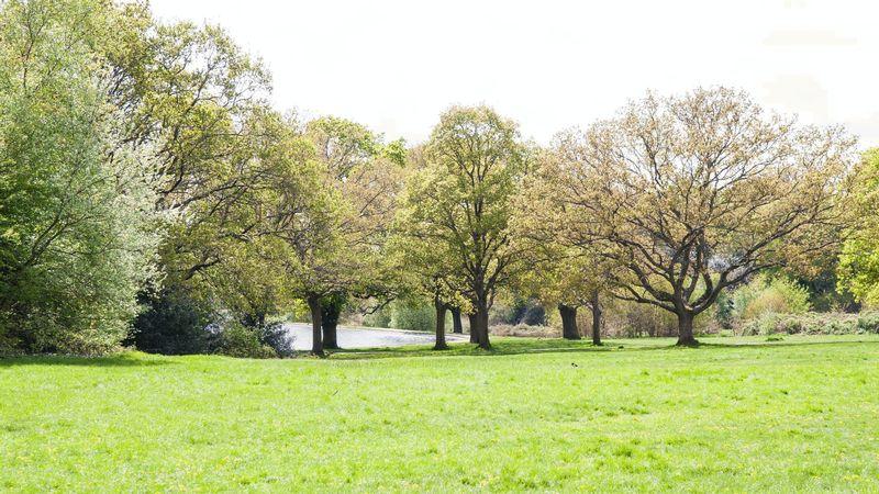 Portswood Local Area