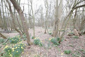 Marsh Lane Worlingham