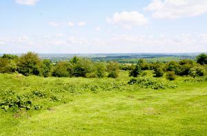 North Hills Brill