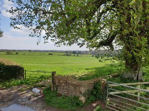 The Drive Long Newnton