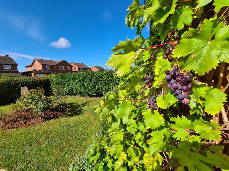 Vine Tree Close Withington