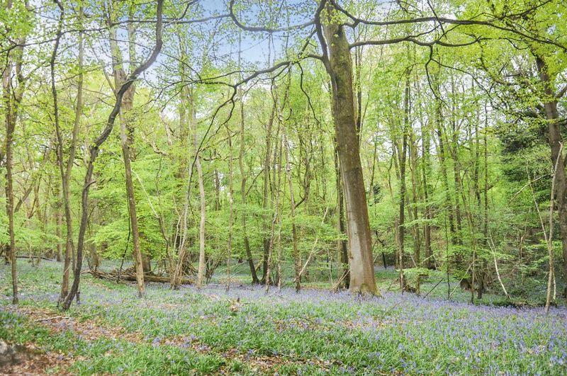 Weir Wood