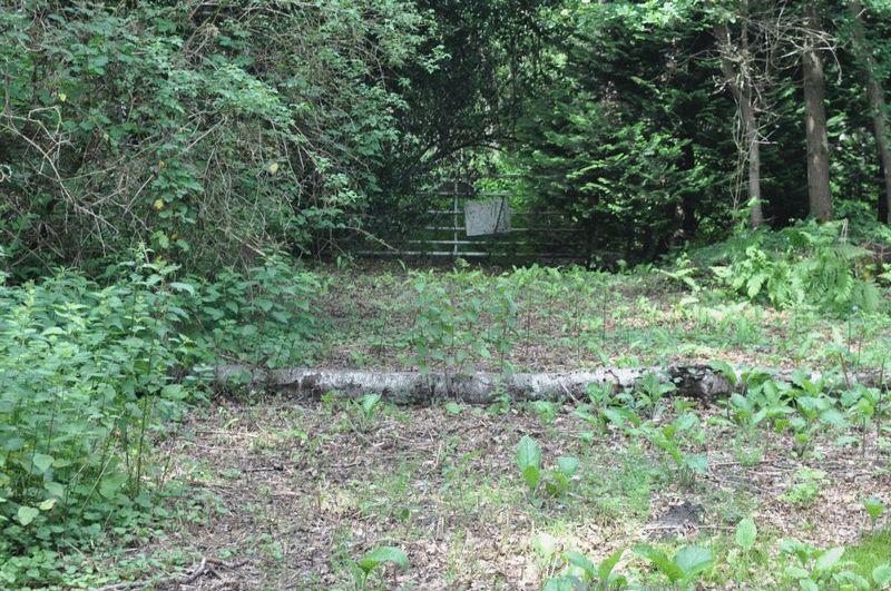 Whitmoor Common Worplesdon